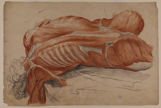 Tomasso Pillori (1750-1824). Apunte anatómico directo del cadáver, c. 1780. Colección Juan Bordes.
